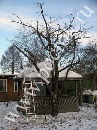 Обрезка яблонь, груш и других плодовых и декоративных деревьев и кустарников